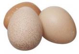 Яйцо цесариное 1 уп. (10 шт.)